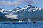 Baleines à bosse en avant-plan avec petites branchies netter déchargement saumon à tendre à fond dans l'Inside Passage Canal Lynn Juneau Alaska du sud-est été