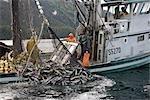 Bobines de senneur de pêche commerciale dans une pêche de saumons sockeye pour décharger leurs poissons détiennent l'été du Prince William en Alaska