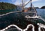 Bateau de pêche commerciale seiner transport grandes prises de saumons roses sud-ouest AK Kodiak archipel été