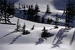 Winter Scenic Admiralty Isl Alpine Area Southeast Alaska