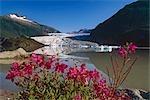 Mendenhall Glacier Lake Dwarf Fireweed Landlocked AK Southeast Tongass Natl Forest