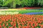 Keukenhof Gardens, Lisse, Holland