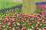 Tulipes, jardins de Keukenhof, Lisse, Pays-Bas