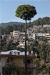McLeod Ganj, Dharamshala, Kangra District, Himachal Pradesh, India