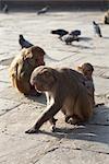 Monkeys at Monkey Temple, Kathmandu, Nepal