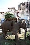 Street Scene, Jodhpur, Rajasthan, India