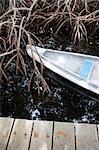Canoe and mangroves,Rosario Islands,Cartagena,Colombia