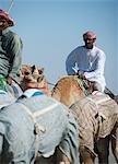 Camel herders,Dubai,UAE.
