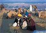 The annual camel mela at Pushkar oasis,Jaipur,Rajasthan,India.