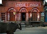 Vache promenades pat boutique présentant des signes de Coca Cola, Agra, Uttar Pradesh, Inde