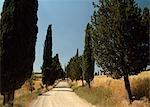 Road through cypress trees,Montichello,Tuscany,Italy
