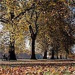 Autumn foliage in Hyde Park,London,England,UK