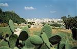 Overlooking cactus towards Zurrieq,Malta