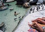 Manchots nageant autour de péninsule de touristes, Boulders Beach, Cape, Afrique du Sud