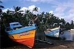 FISHING BOATS & PALMS,COLOMBO SRILANKA