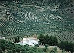 Petite église dans les oliveraies, Andalucia, Espagne