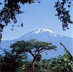 Mont Kilimanjaro, Moshi, Tanzanie