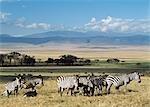 Zebra, Parc National de Ngorogoro, Tanzanie.