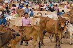 People at cattle market,Ubon Ratchathani,Isan,Thailand