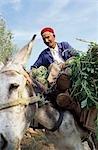 Agriculteur, Hammamet, Tunisie