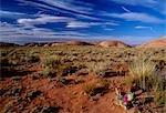 Cacti in Monument Valley,Arizona,USA