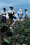 Vue du haut de la marble mountain, Vietnam