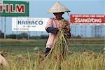 Agriculture devant advertsement, Hanoi, Vietnam