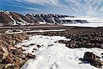 Arctic Fox Tracks in the Snow, Craig Harbour, Ellesmere Island, Nunavut, Canada