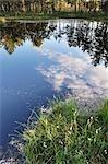 Spiegelbild im See, Store Mosse Nationalpark, Schweden