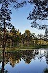 Blick auf den See, Store Mosse Nationalpark, Schweden