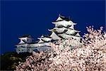 Arbre de la cerise, du château de Himeji, Himeji, préfecture de Hyogo, région de Kinki, Honshu, Japon