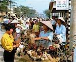 Chicken for sale at a down town market, Vietnam