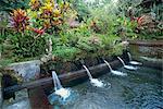 Water temple, Bali, Indonesia, Southeast Asia, Asia