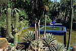 Cacti and fountain in the Majorelle Gardens, Marrakesh (Marrakech), Morocco, North Africa, Africa