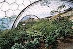 BioM-Interieur, das Eden Project, in der Nähe von St. Austell, Cornwall, England, Vereinigtes Königreich, Europa