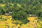 Valley, Toraja area, Sulawesi, Indonesia, Southeast Asia, Asia