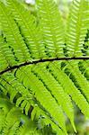 Monteverde Cloud Forest Reserve, Monteverde, Costa Rica, Amérique centrale