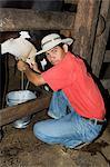 Milking cows, Hacienda Guachipelin, near Rincon de la Vieja National Park, Guanacaste, Costa Rica, Central America