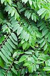 Végétation dans la forêt, Parc National de Tortuguero, Costa Rica, l'Amérique centrale