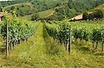 Vignobles dans la campagne près de Saint Jean Pied de Port (Saint-Jean-Pied-de-Port), Pays Basque, Pyrénées-Atlantiques, Aquitaine, France, Europe