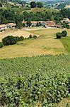 Campagne près de St. Jean Pied de Port, Basque country, Pyrénées-Atlantiques, Aquitaine, France, Europe