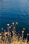 Porte‑graines, Assos, Kefalonia (Céphalonie), îles Ioniennes, Grèce, Europe