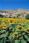 Landscape near Priene, Anatolia, Turkey, Asia Minor, Eurasia