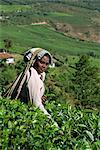 Tea plucker on estate near Munnar, Kerala state, India, Asia
