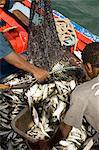 At the fish market, Mindelo, Sao Vicente, Cape Verde Islands, Africa