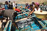 Fresh fish just caught, Tarrafal, Santiago, Cape Verde Islands, Africa