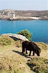 Bryer (Bryher), Isles of Scilly, aus Cornwall, Vereinigtes Königreich, Europa