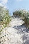 Chemin d'accès au sable, Vorupoer, Jylland, Danemark