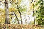 Forest in Autumn, Hamburg, Germany