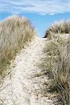 Chemin d'accès au sable, Strandby, Jylland, Danemark
